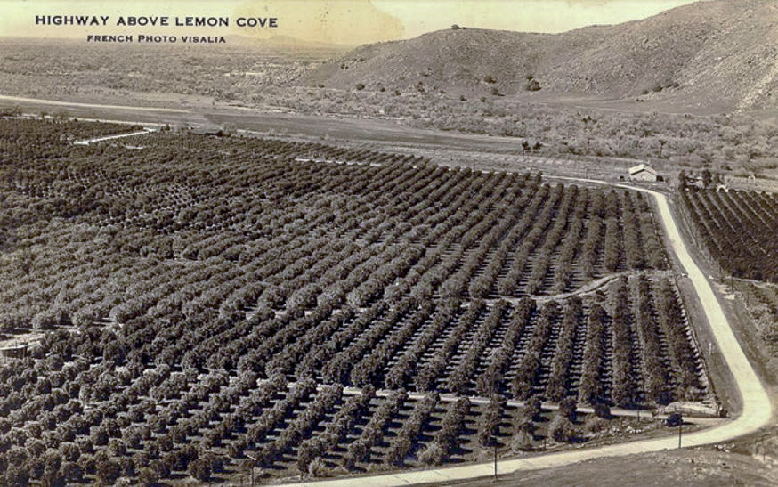 Lemon Cove