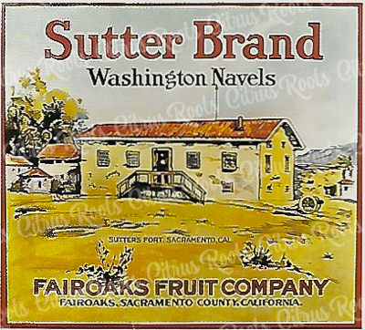 Sutter Brand Washington Navels